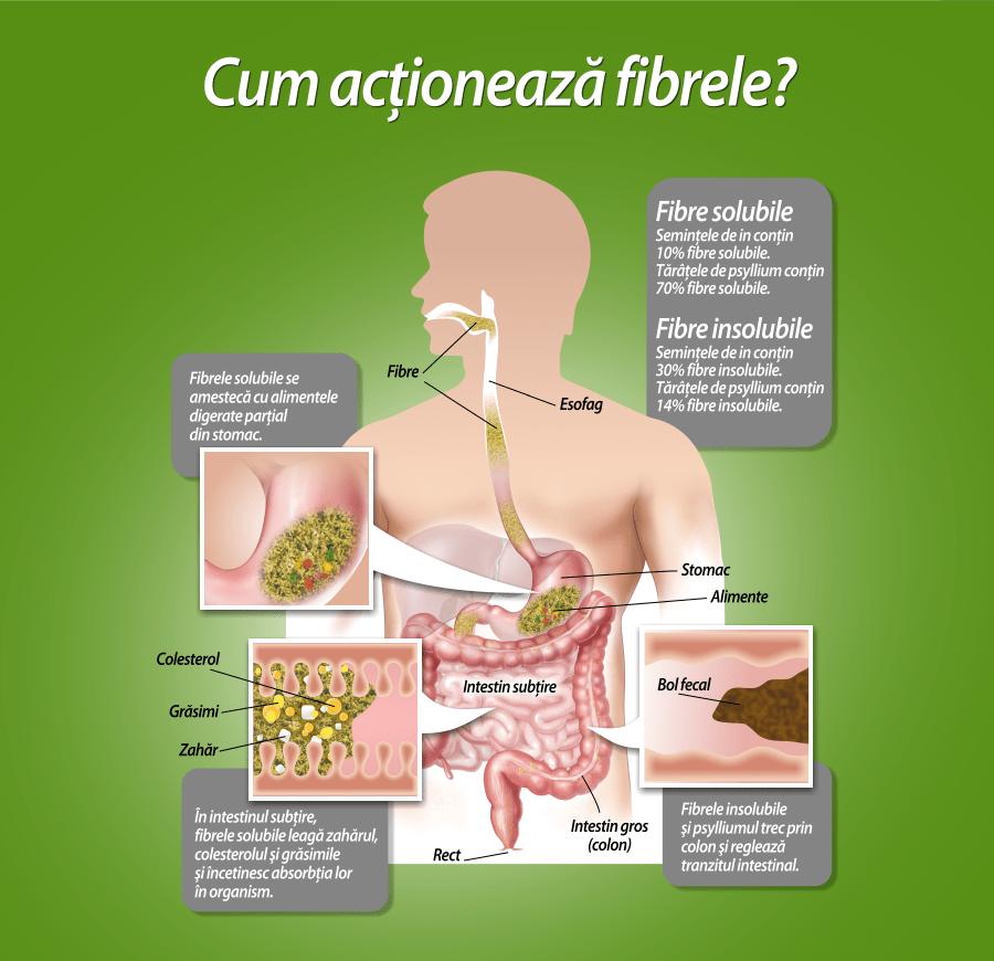 cum-actioneaza-fibrele-colonhelp